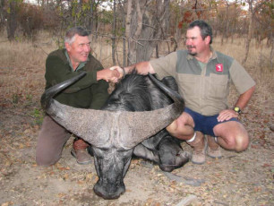 buffalo-hunt-zimbabwe-05